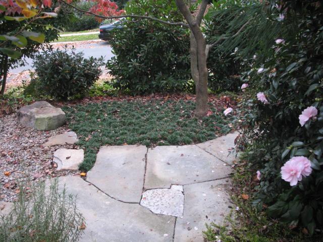 Japanese Inspired Garden Part 97