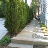 Juniper Hedge
