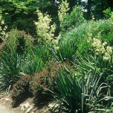 Mixed shrub and perennial border.