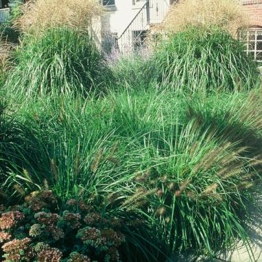 Grasses in Summer.
